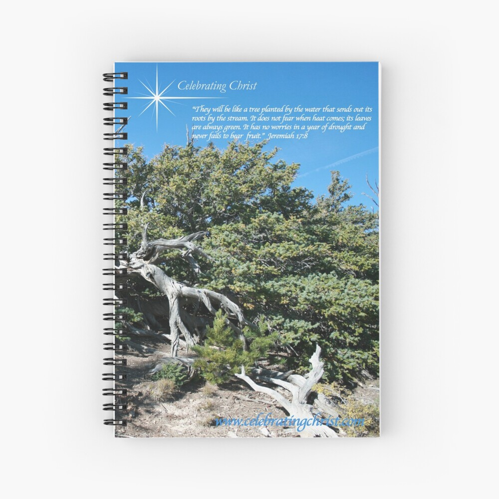 Bristlecone Pine Story Image  - From ccnow.info Spiral Notebook