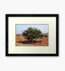 Goats in Trees Framed Print