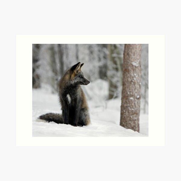 Silver Fox in Snow Art Print
