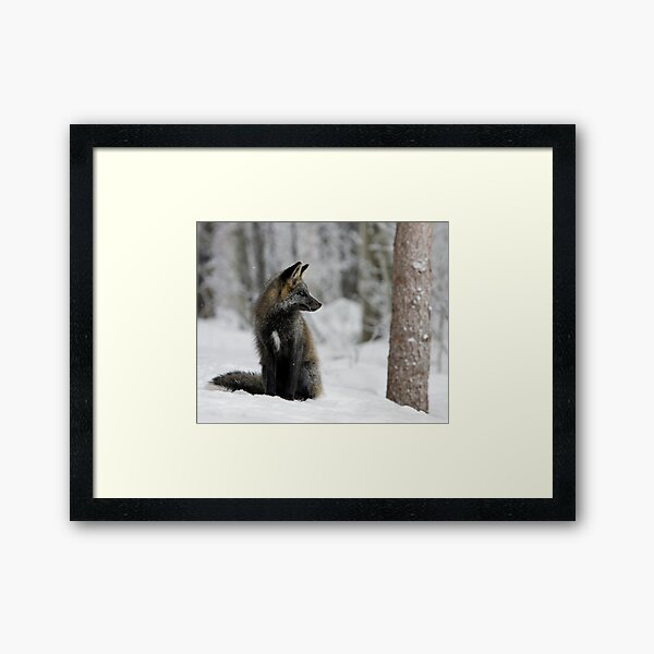 Silver Fox in Snow Framed Art Print
