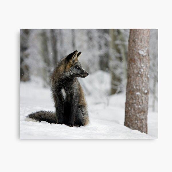 Silver Fox in Snow Canvas Print