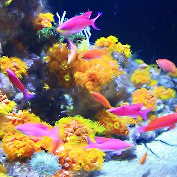 Pink Anthias and Coral by bonnie-follett