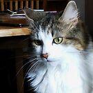 Feline Furball von BlueMoonRose