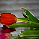 The Tulip by Virginia N. Fred