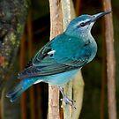 Watch the birdie by WonderlandGlass