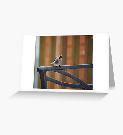 Red Poll Greeting Card