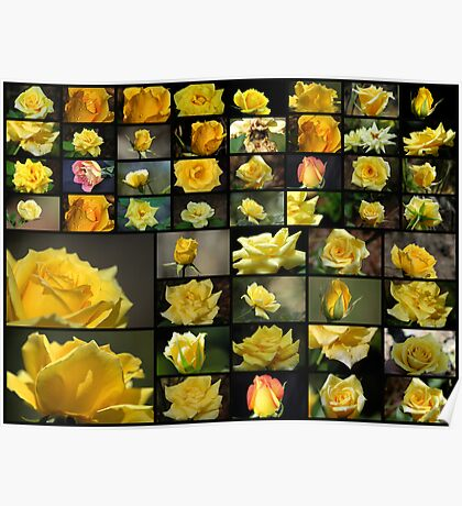 50 Yellow Roses Poster