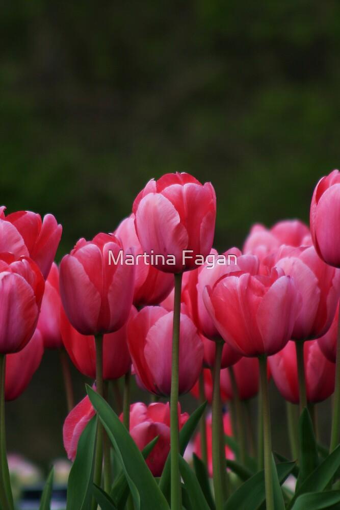 Pink tulips by Martina Fagan