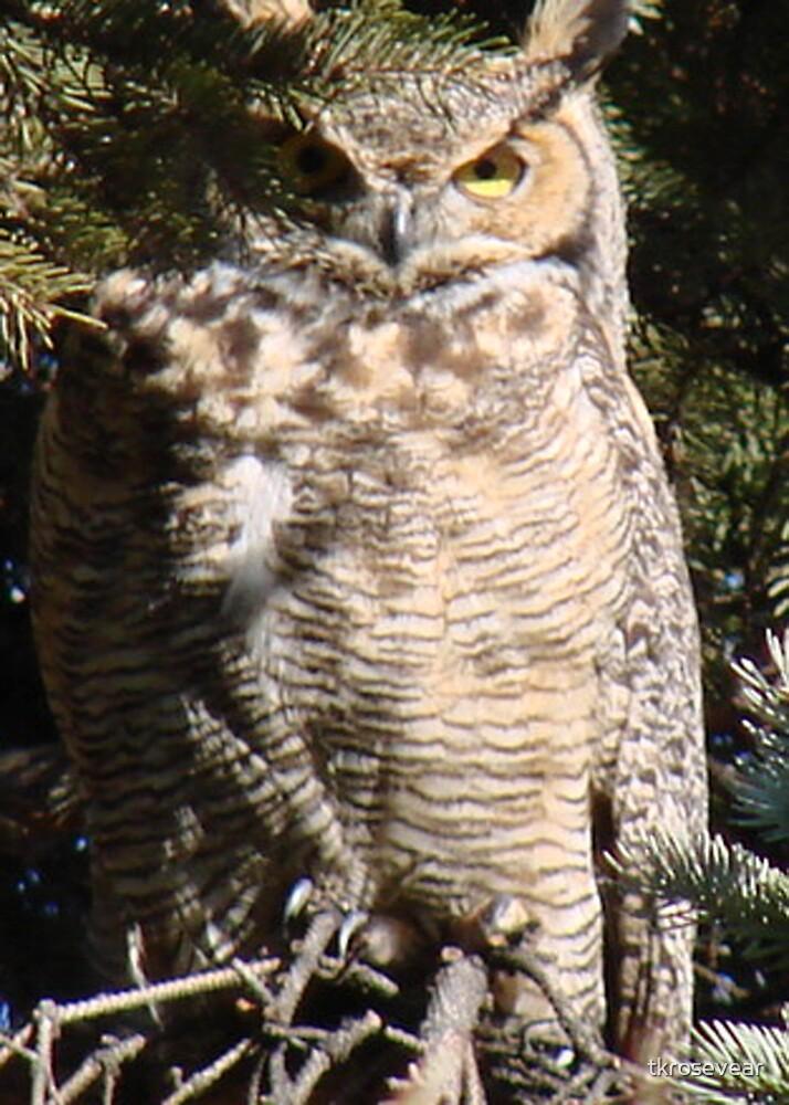 PNW Raptor - Great Horned Owl2 by tkrosevear
