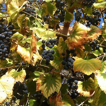 grapes by DrFrankenbaum