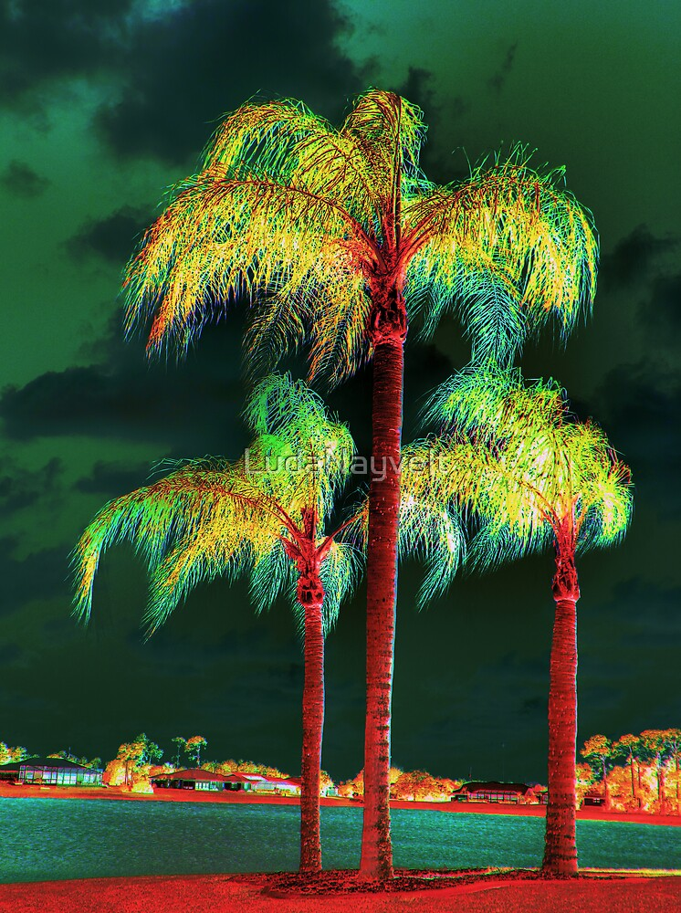 Palms trees  by LudaNayvelt
