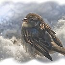 Snow, sun, and a sparrow by Thea 65