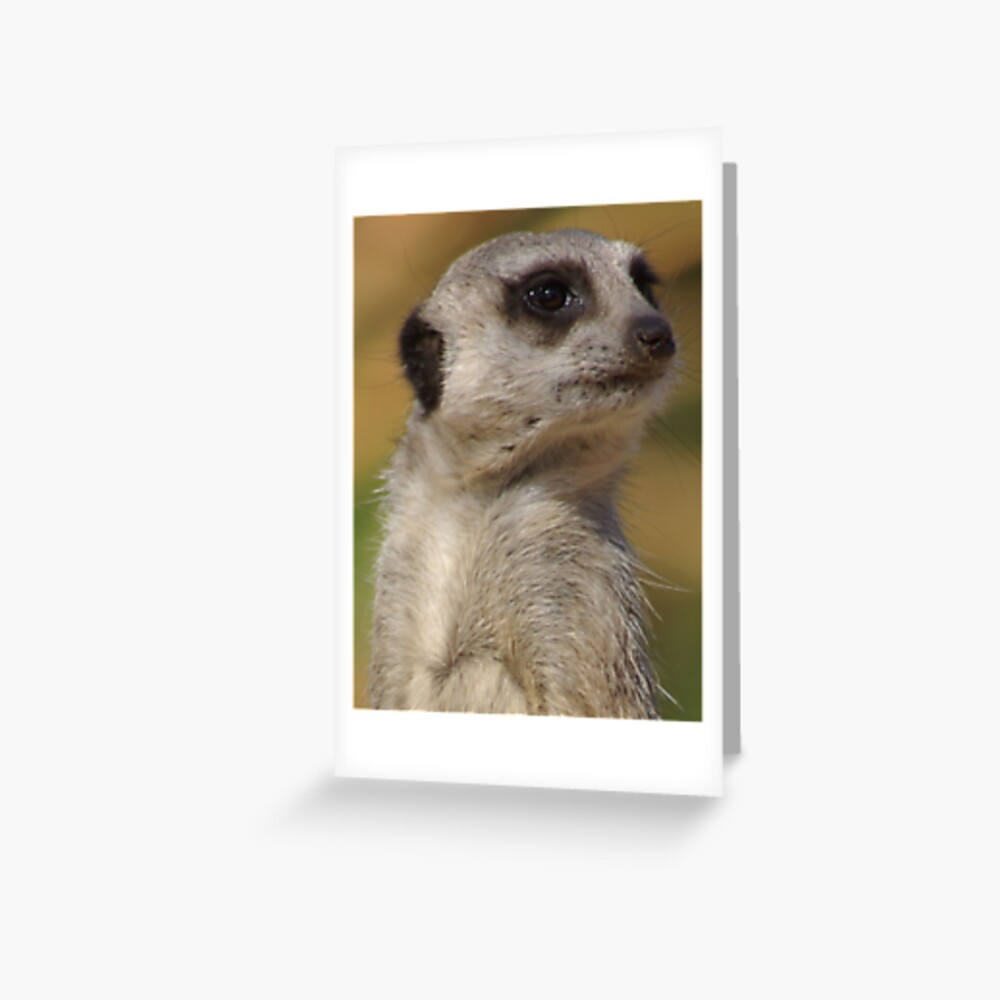 Meerkat model  Greeting Card