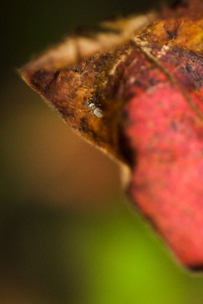 an insects world by Raymond Capozzi