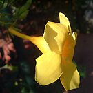 yellow 2 by sneha