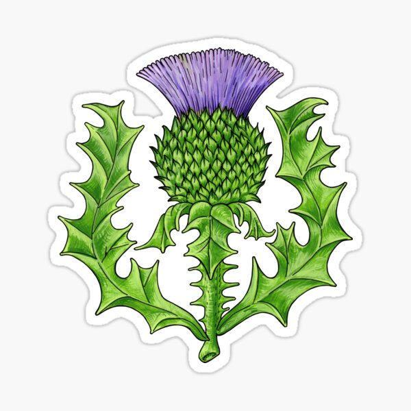A Thistle Proper Sticker