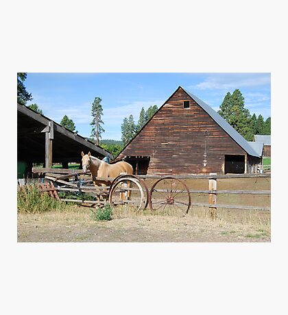 Horse by the barn Photographic Print