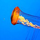 Jellyfish by Darlene Lankford Honeycutt
