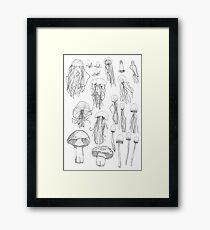 Transitioning Mushrooms Framed Print