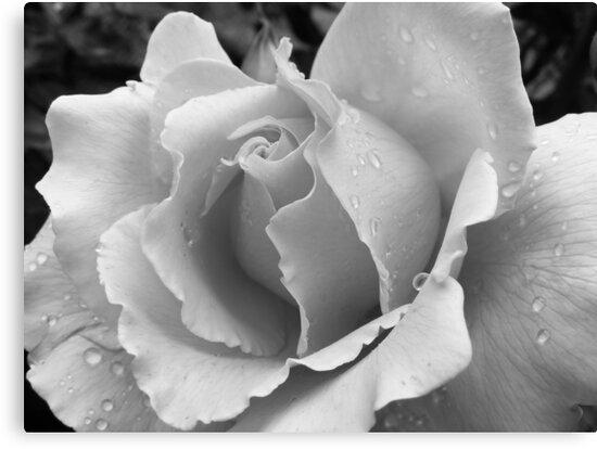 b/w flowers - macro by gaylene