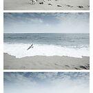 Disappearing Footprints by Zoltan Madacsi