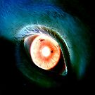 eye by mikec