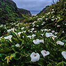 Big Sur Garrapata Beach Calla Lillies  (vertical) by photosbyflood