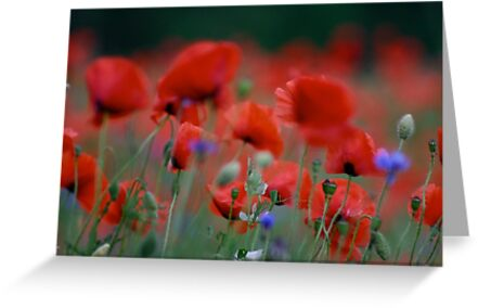 Views 10979 . Beautiful dancing poppy flowers.   A mnie jet szkoda lata. Andre Brown Sugar This image Has Been S O L D .  Fav 41 .  Buy what you like! Thx! by © Andrzej Goszcz,M.D. Ph.D