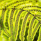Polka Dot Falls by Marilyn Cornwell
