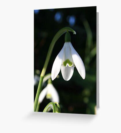 snowdrop Greeting Card