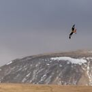 Red Kite Country by Stephen Liptrot