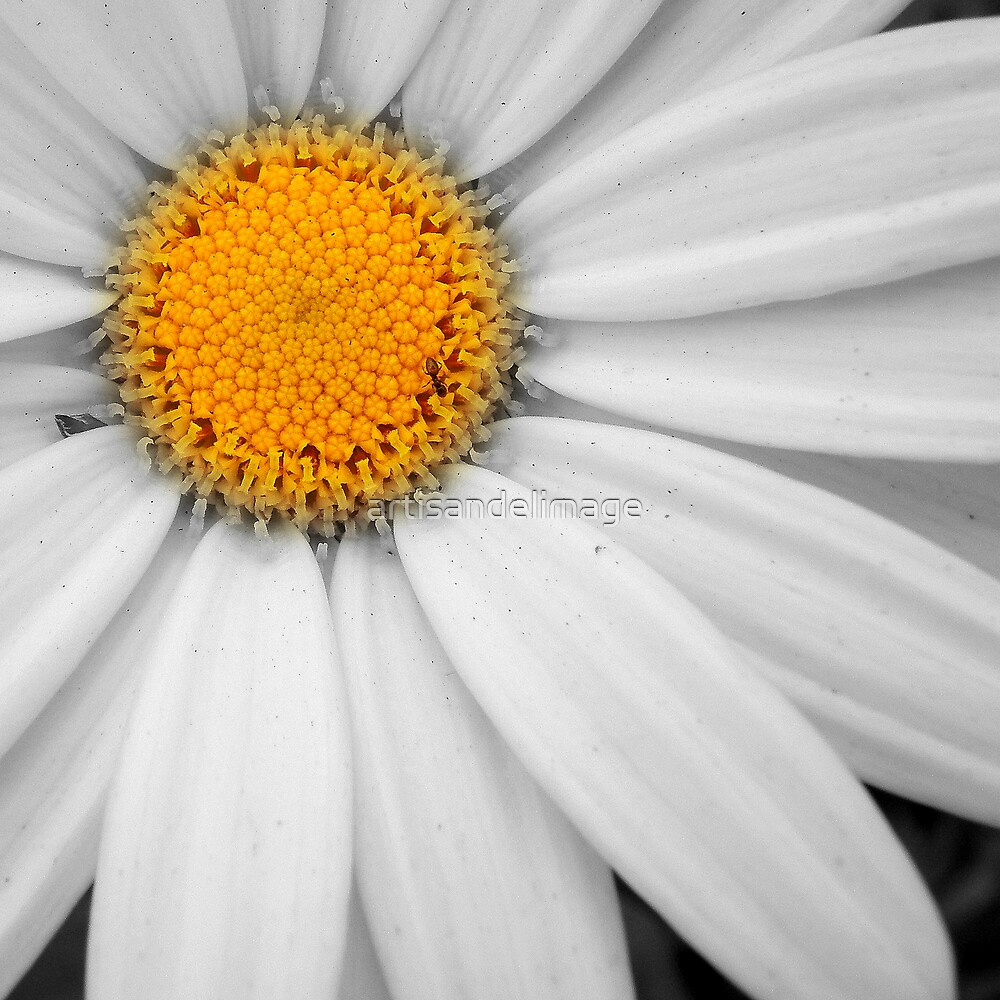White With A Hint Of Color by artisandelimage