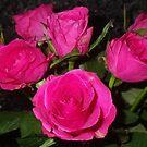 roses.  by UncaDeej