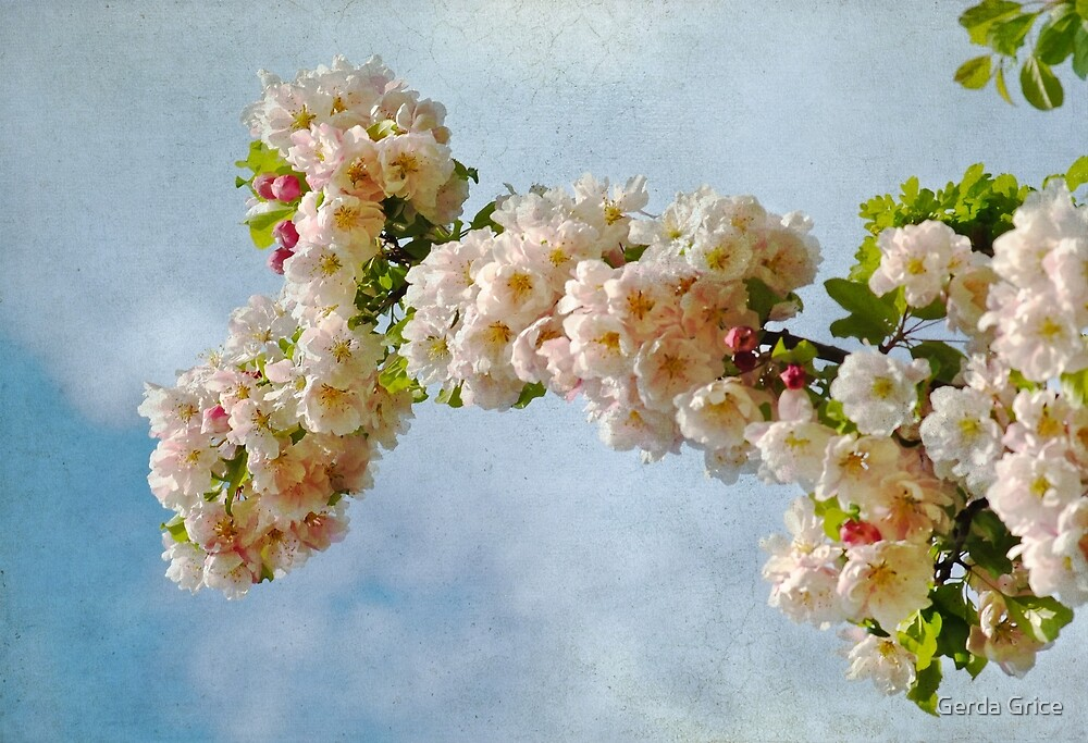 Clouds and Blossoms by Gerda Grice