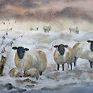 Winter Woolies by bevmorgan