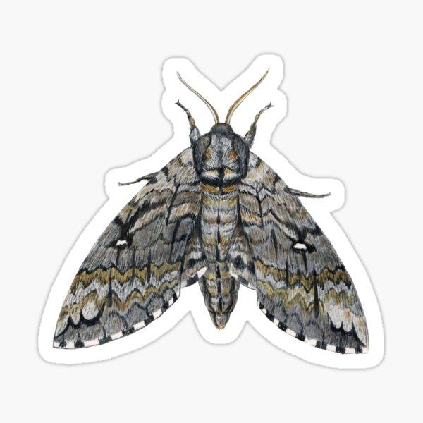 Waved Sphinx (Ceratomia undulosa) Sticker