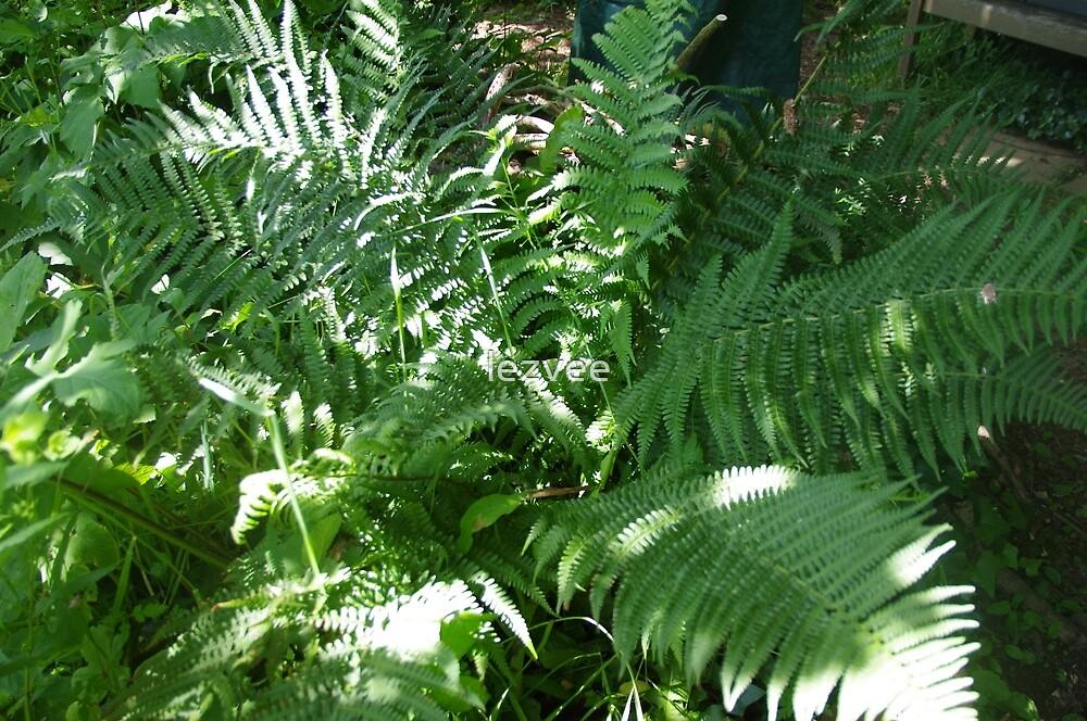 Bracken Ferns in Dappled Sun by lezvee