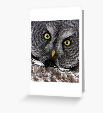 Great Grey Gaze, Transfixing Greeting Card