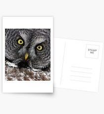 Great Grey Gaze, Transfixing Postcards