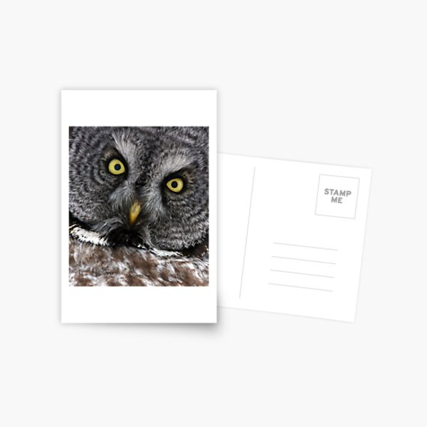 Great Grey Gaze, Transfixing Postcard