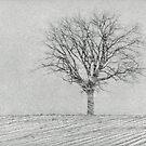 Snow Storm by Sandra Guzman