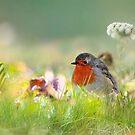 Little Robin by Morag Bates