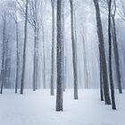 Foggy frozen winter forest by Patrik Lovrin