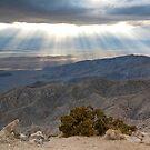 Mojave Desert Sunset by Nickolay Stanev