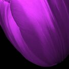 Abstract Purple in Tulip by DottieDees