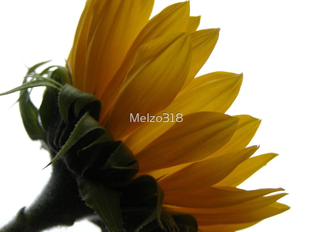 Sunny Delight by Melzo318