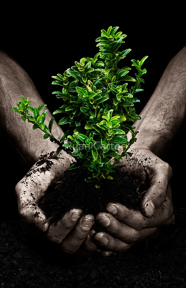 Tree in Hands by Ryan Carter