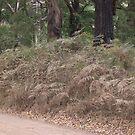Stifled Ferns on a dusty road in the bush by oiseau