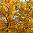 Autumn gold by deepaHHV