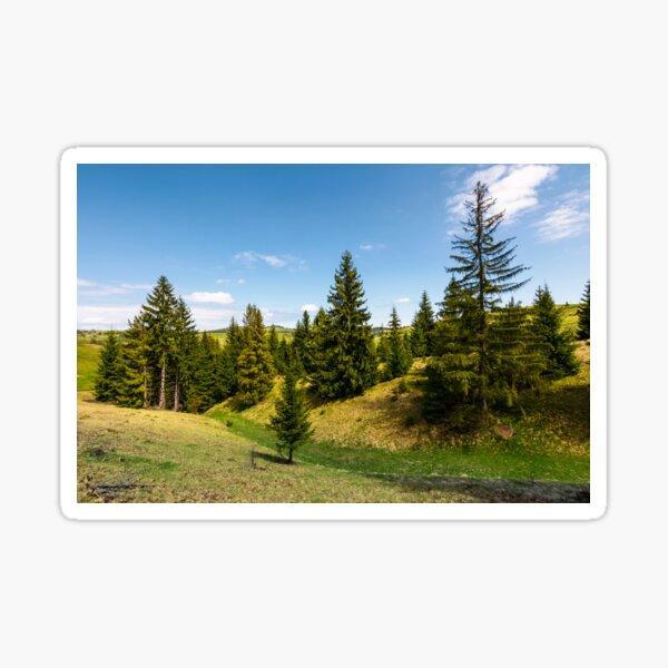 spruce forest on grassy hills Sticker